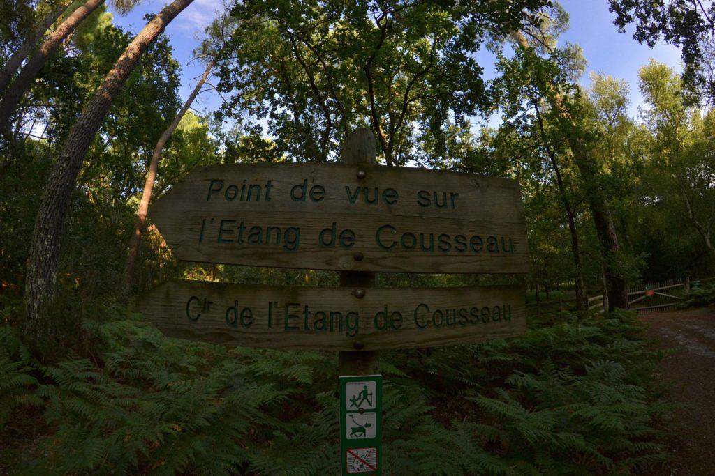 etang-de-cousseau-reserve-naturelle-etang-de-cousseau-randonnee-nature-balade-carcans-lacanau-verdure-les-ptits-touristes-blog-voyage