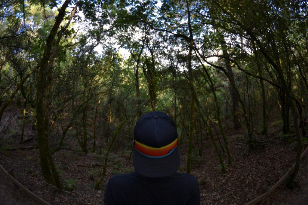 etang-de-cousseau-reserve-naturelle-etang-de-cousseau-randonnee-pins-nature-balade-carcans-lacanau-foret-les-ptits-touristes-blog-voyage