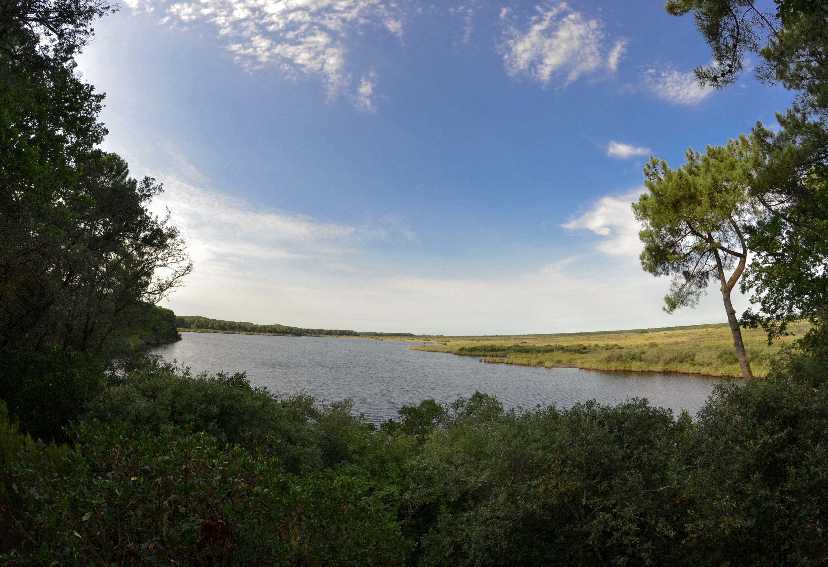 etang-de-cousseau-reserve-naturelle-etang-de-cousseau-randonnee-pins-nature-balade-carcans-lacanau-foret-vacances-les-ptits-touristes-blog-voyage