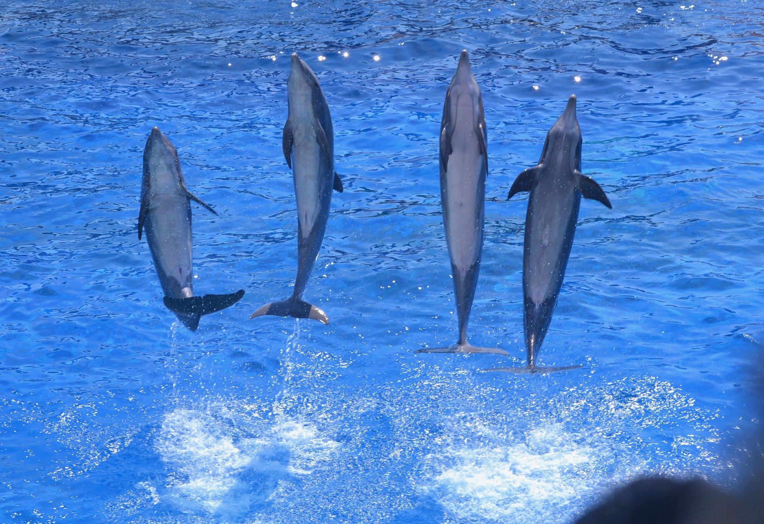 marineland-antibes-une-semaine-a-nice-blog-voyage-les-ptits-touristes-1